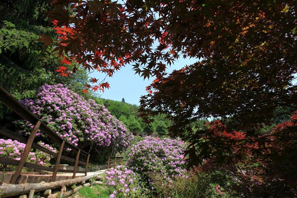 weekend piemonte bambini oasi zegna conca dei rododentri