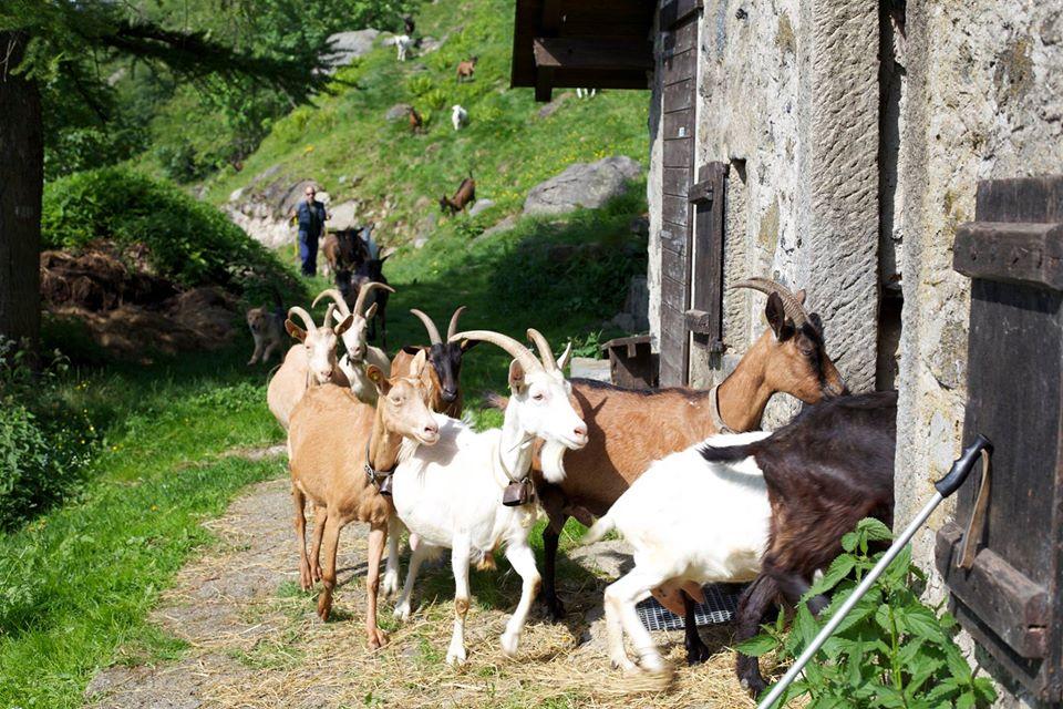 weekend piemonte bambini oasi zegna alpe margosio agriturismo