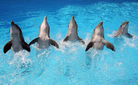 zoomarine roma delfini