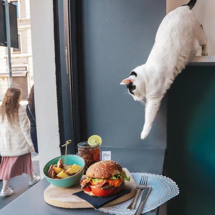 neko cafè-Crazy-Cat-Cafe-Milano-8
