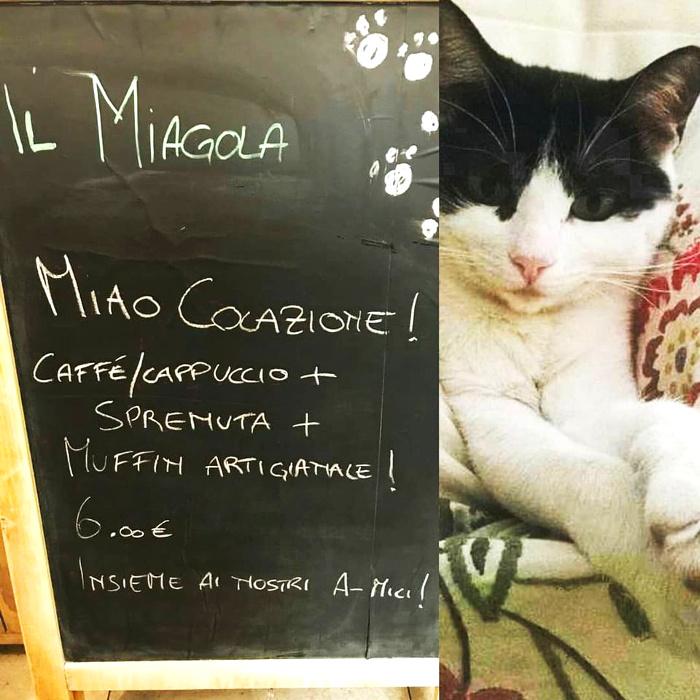 neko cafè-Miagola-cafe-Torino-4