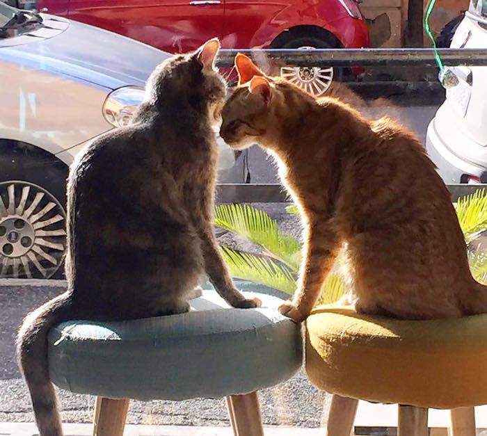 neko cafè-Romeow-cat-bistrot-Roma-6