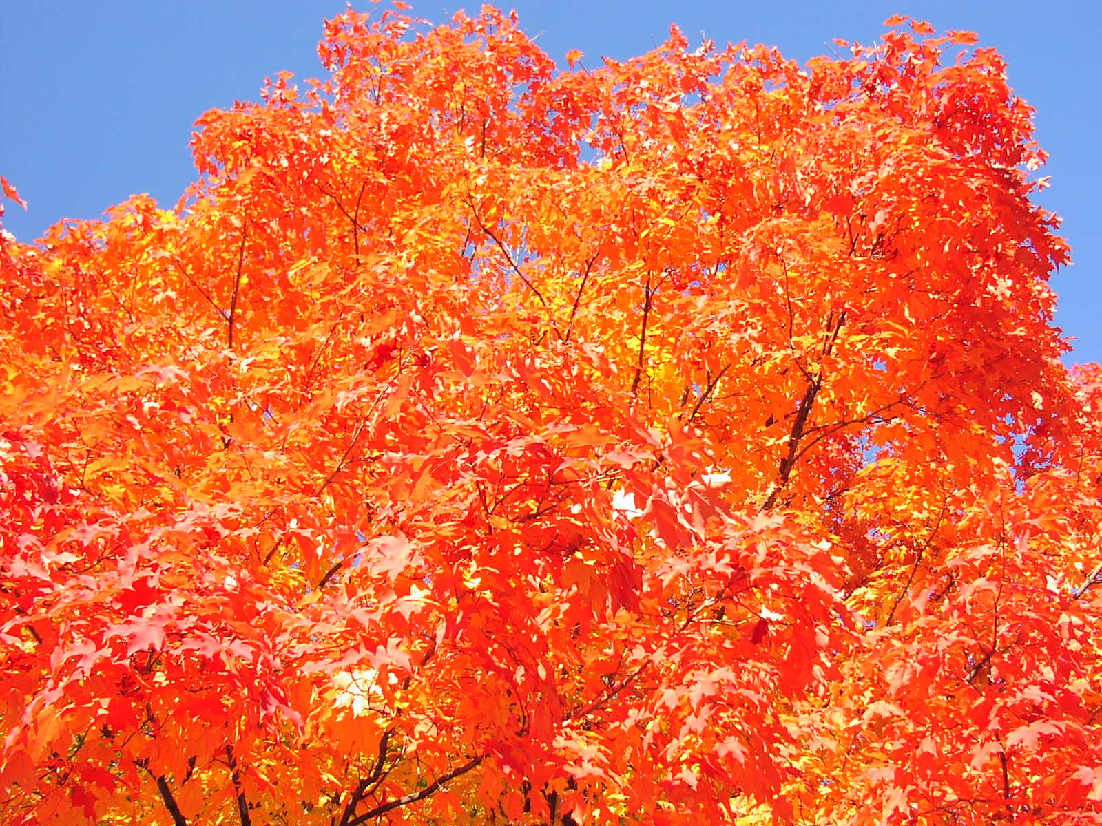 Fall foliage on Kenny Ave.