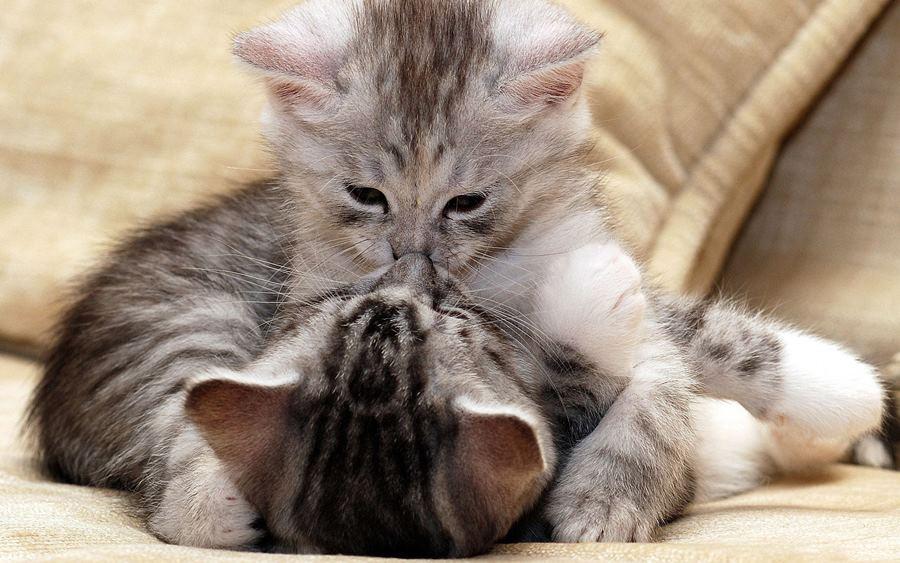 vruća uska maca fotografija