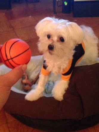 Like Briante Weber, this pup has crazy on-ball skills.