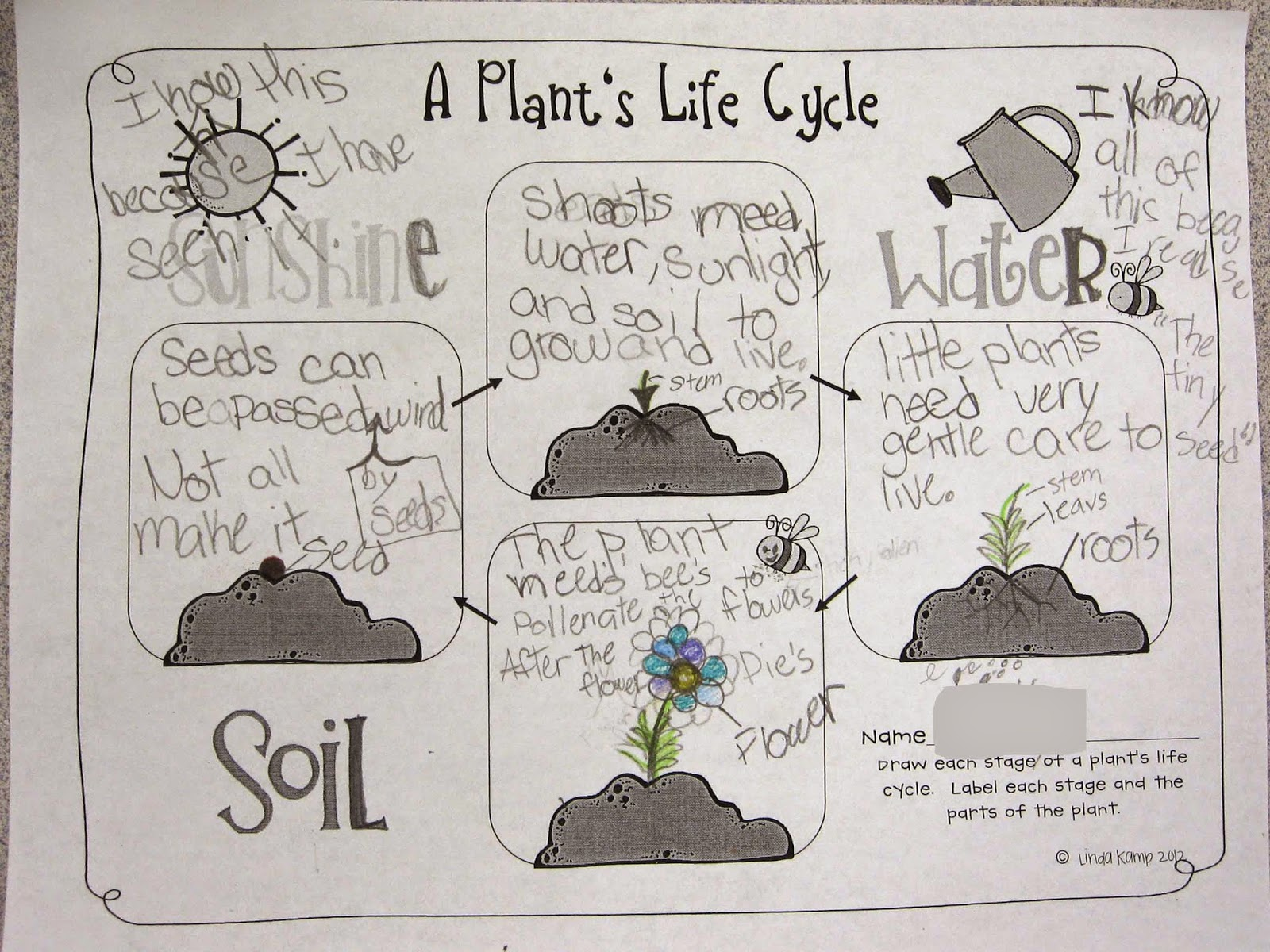 worksheet Life Cycle Of Plants And Animals Worksheets plant life cycle worksheet 3rd grade free worksheets library other popular worksheets