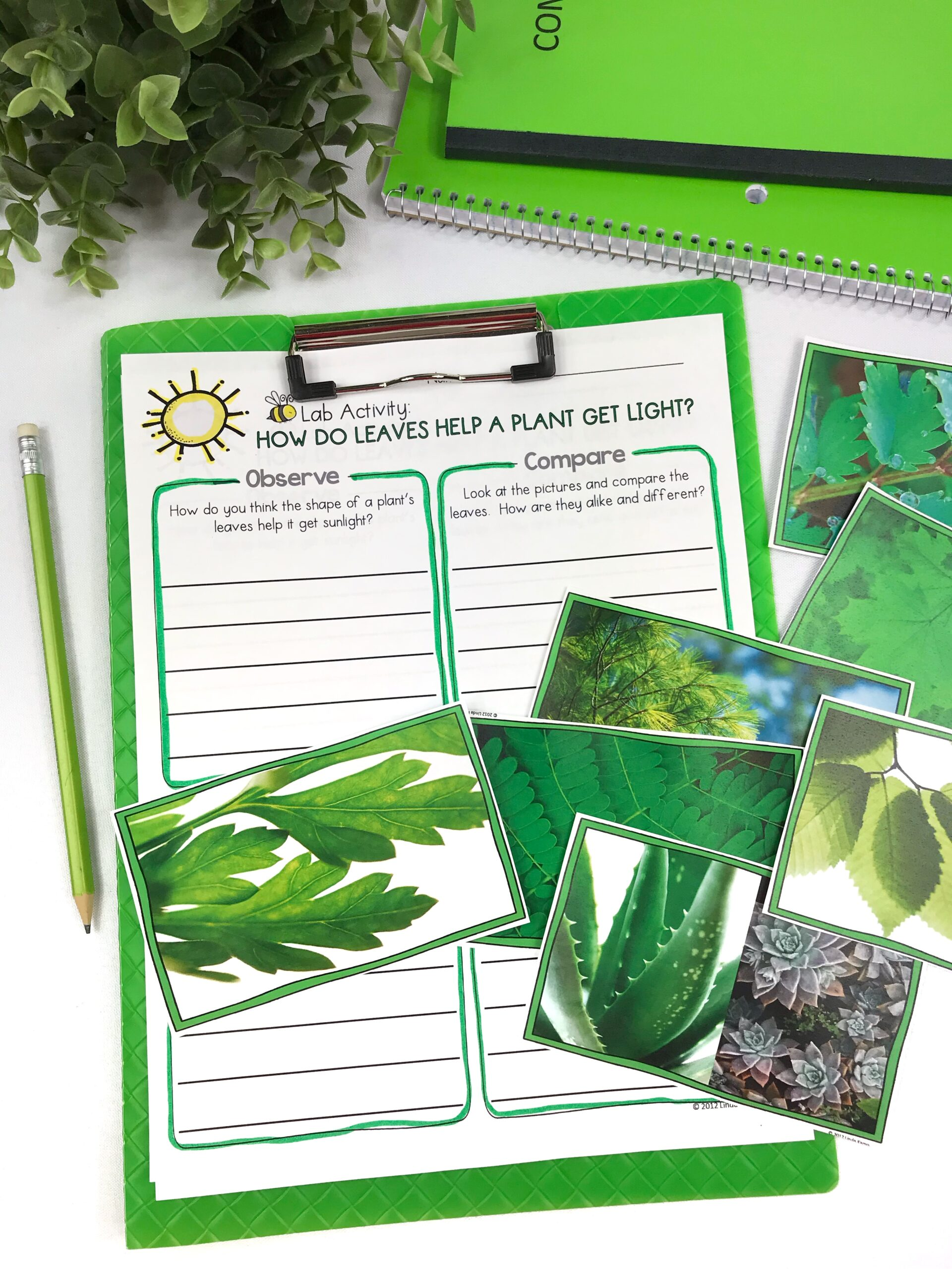 How Leaves Help Plants Science Activity 2nd Grade