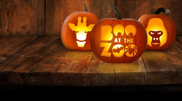 Boo at the Zoo for Halloween