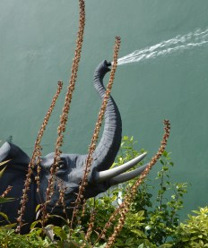 Elephant at Alcorn's Tropical World in Donegal