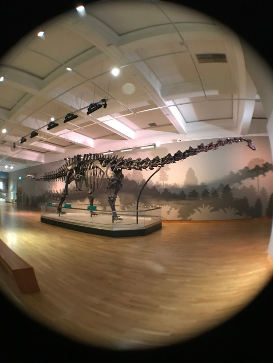 A fish eye view of Dippy the Dinosaur at the Ulster Museum in Belfast