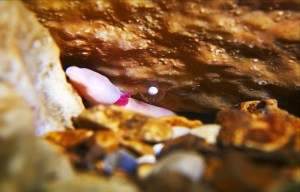 A female Olm lays her eggs in Postojna Cave