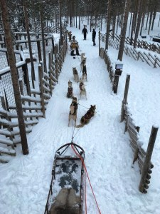 Dog sled ride at Husky Park in Santa Claus Village, Rovaniemi