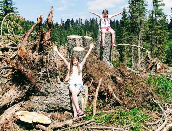 Lily-Belle and Matilda resting on the stumps left by a tornado