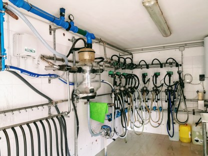 Milking parlour at at Malga Pampeago, Italy