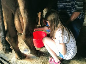 Lily-Belle milking cows at Malga Pampeago, Italy