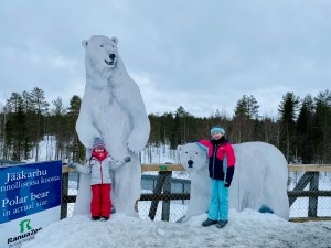 Polar Bear size guide at Ranua Zoo, Finland