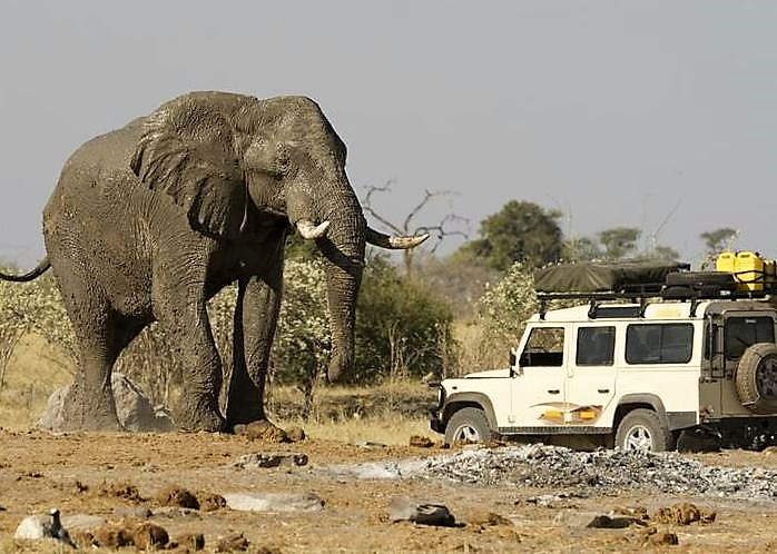 photo of elephant and safari vehicle