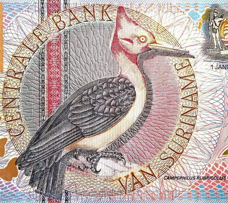 closeup detail from Suriname 5 Guden Banknote, Year 2000 front, featuring red necked woodpecker bird