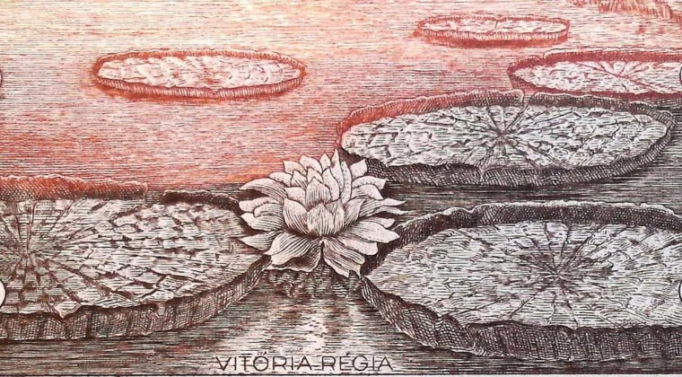 closeup of lily pads on Brazil 5 Cruzeiros Banknote