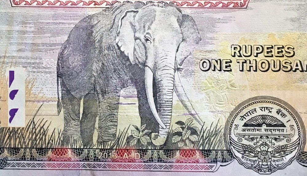 Nepal 1000 Rupees Banknote, year 2016, front, featuring elephant