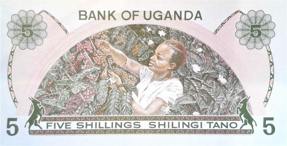 Uganda 5 shilling banknote back, featuring woman harvesting coffee beans