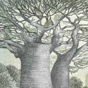 Madagascar 2000 Ariary banknote back (2) featuring Baobab tree