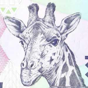 Tanzania 500 Shilling banknote front featuring giraffe