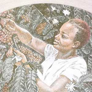 Uganda 5 Shilling banknote back (2) featuring woman harvesting coffee beans
