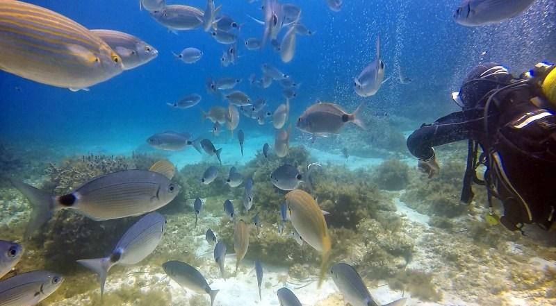 Scuba diving fears