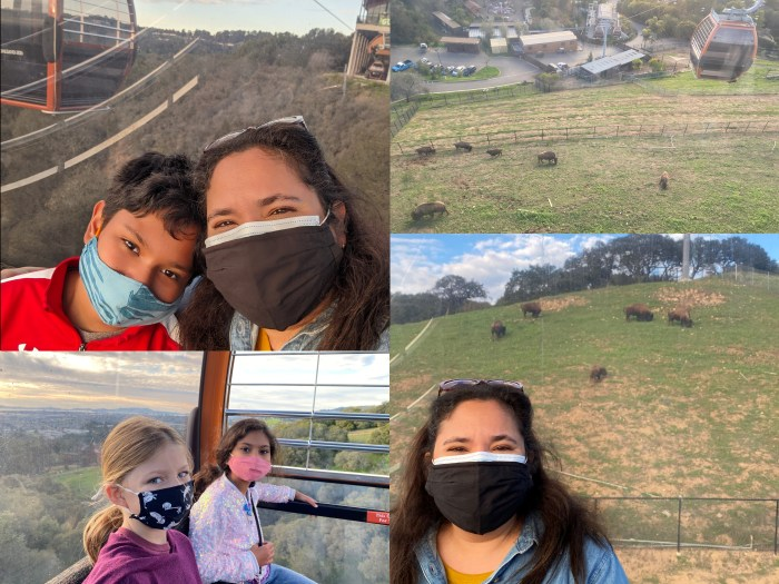 Images from the Gondola at the Oakland Zoo
