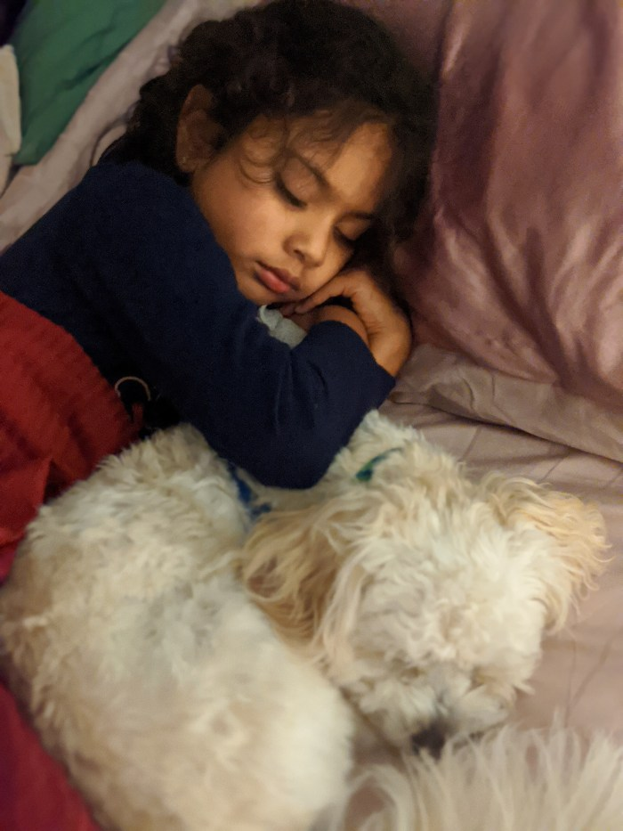 Young girl and small white dog sleeping together