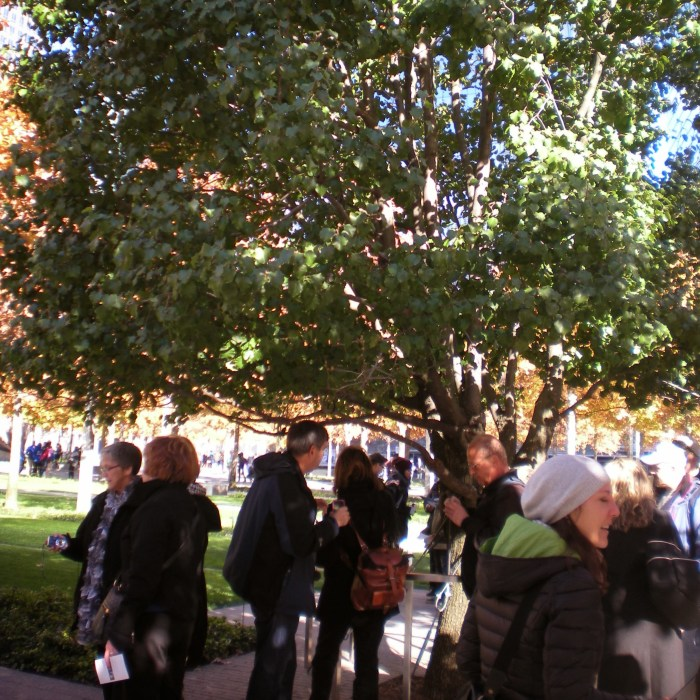 A crowd in front of the Survivor Tree at the World Trade Center