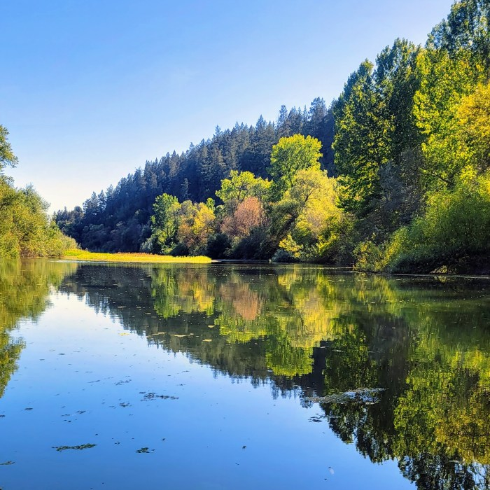 The trees reflecting off the glass like water of the Russian River