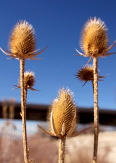 img_0476-cactus