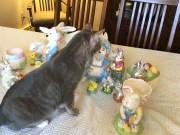 Roxie and the Ceramic Bunnies