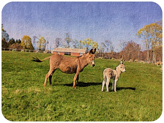 Momma and Baby Donkey