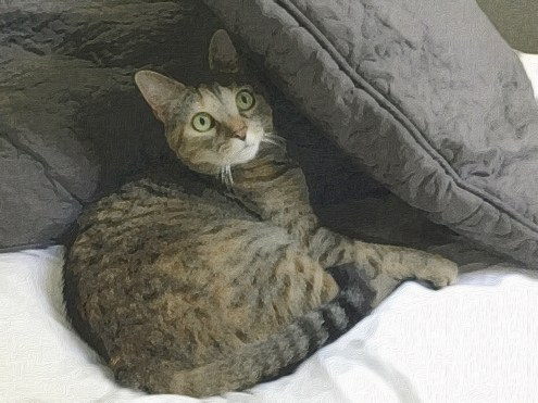 ZuZu Under a Pillow