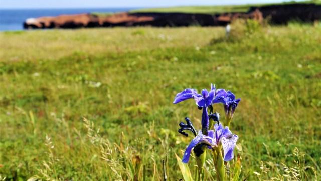 fleurs iles madeleine canada quebec voyage