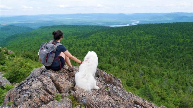 Mont carleton acadie nouveau-brunswick randonnee chien blog voyage arpenter le chemin