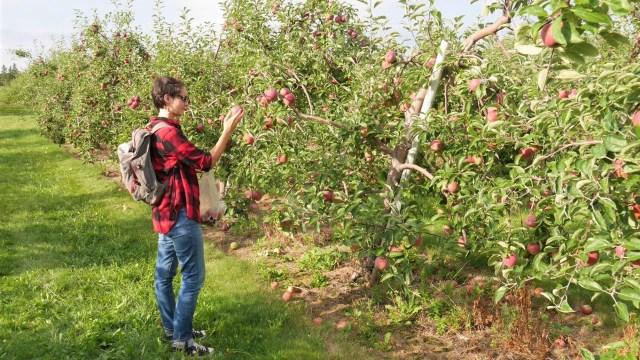 auto-cueillette pommes canada activites automne ete indien que faire nouveau-brunswick septembre octobre voyage