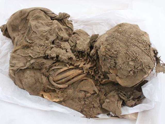 Hallan restos de perros momificados de mil años en complejo arqueológico Maranga, Lima