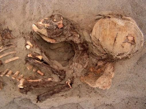 Una joven llama (izquierda) y un niño amortajado fueron enterrados en el mismo pozo: un fenómeno común en Las Llamas, pero que, por lo general, no suele encontrarse en los Andes precolombinos. FOTOGRAFÍA DE GABRIEL PRIETO