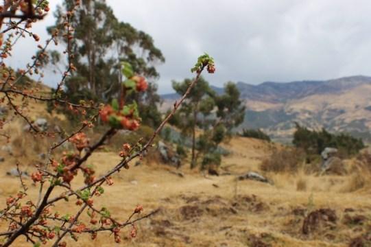 Quillarumiyoc-Anta-Cusco-33