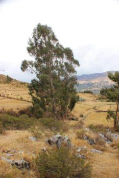Quillarumiyoc-Anta-Cusco-39