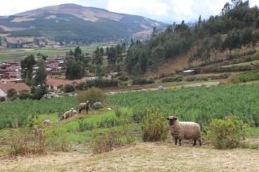 Quillarumiyoc-Anta-Cusco-89