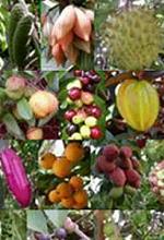 Projeto Colecionando Frutas