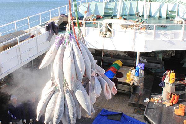 Rio Grande do Norte é responsável pela maior parte da exportação de atum nobre pelo Brasil