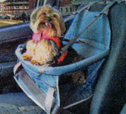 Grade vertical entre os bancos e cadeiras como as usadas para crianças,são presas ao assento e garante segurança