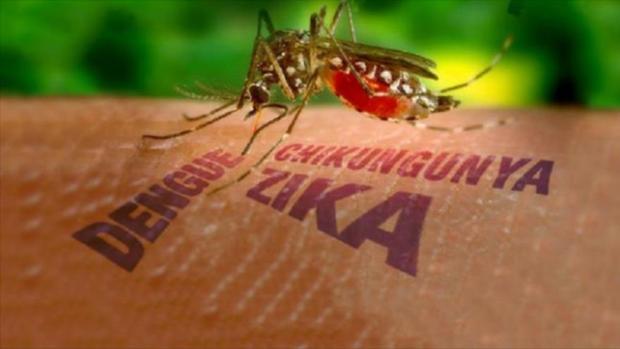 Nyamuk-Zika