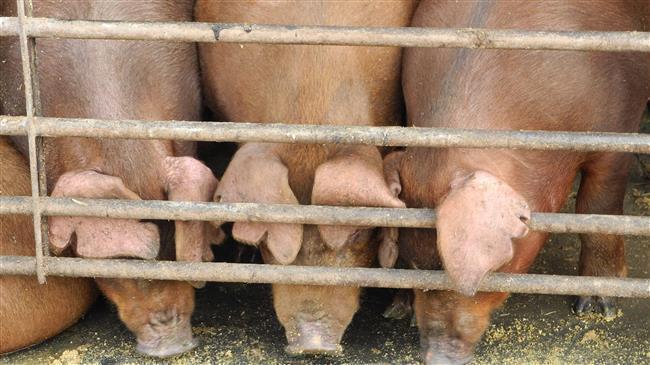 Muslim di Penjara Alaska Diberi Makan Daging Babi Selama Ramadhan